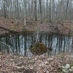 RMN Salamander Hike, March 3, 2012: Small vernal pool. Photo by Eric Johnson.